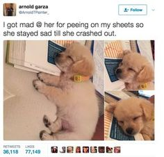 Featuring cute family members and even cuter pets. Cute Funny Animals, Cute Baby Animals, Funny Cute, Funny Dogs, Animals And Pets, Cute Puppies, Cute Dogs, Dog Memes, Animal Memes