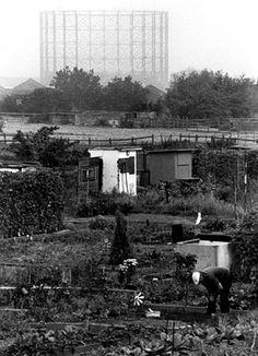 Allotment, Mudchute Farm, Isle of Dogs, 1991. Photo by Bob Stuart