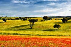 12 Breathtaking Places to Visit in Portugal Before You Die Nature Landscape, Flower Landscape, Landscape Photos, Landscape Photography, New York Times, Book Cheap Hotels, Monsaraz, Parque Natural, Wine Tourism