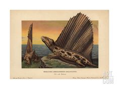 Framed Print-Dimetrodon dollovianus, predatory synapsid from the Permian-Framed Print made in the USA Prehistoric World, Prehistoric Animals, Fine Art Prints, Framed Prints, Canvas Prints, Dinosaur Pictures, Dinosaur Funny, Poster Size Prints, Online Printing