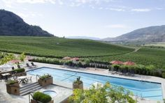 The Vineyards at Burrowing Owls Estate Winery - British Columbia, Canada