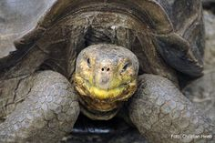Santa Cruz Island in Galapagos. Information and major sites & attractions.