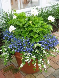 The white geranium is wonderful. The blue flowers are in fact lobelia and the white trailing flower is bacopa. All do fairly well in morning sun and shade in the afternoon. by yvette