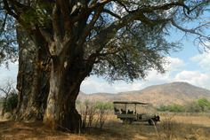 Game Drives in South Luangwa Mountains, Game, Nature, Travel, Naturaleza, Venison, Viajes, Gaming, Traveling