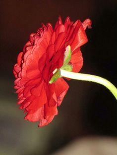 Linda flor...