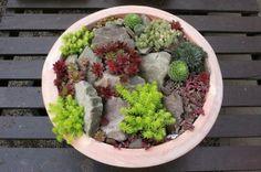 succulent garden by Susan Arabella