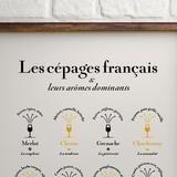 """Affiche """"Les Cépages français et leurs arômes dominants"""""""