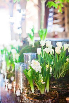 Smokey Mountain wedding  //  watson-studios.  Wow, very earthy, but love the bulbs. Maybe mix with cut flowers?