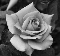 Beautiful Flowers Garden, Love Flowers, Beautiful Roses, Rose Reference, Animal Sleeve Tattoo, Rose Flower Tattoos, Hand Tattoos For Guys, Top Tattoos, Rose Design