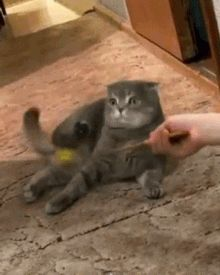 (GIF) Cat realizing who the feather really is.... Shocked does not do justice to the cat's expression!