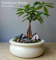 terrarium house  www.basthome.com.tr