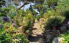 Neptune steps in Abbey Gardens, Tresco, Isles of Scilly, Cornwall, England ✯ ωнιмѕу ѕαη∂у Tresco Abbey Gardens, Kew Gardens, Botanical Gardens, Tropical Garden, Tropical Plants, Indian Garden, Architectural Plants, Garden Structures, Small Island