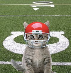 Image result for cat fantasy football