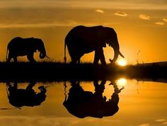 Go to Africa and see Elephants in the sunset