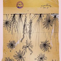 #Repost @brainpicker with @repostapp  Today on Brain Pickings the stunning drawings of neuroscience founding father Santiago Ramón y Cajal: brainpickings.org