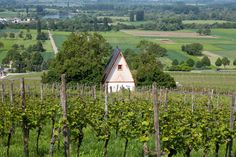 Hessische Bergstrasse is Germany's smallest wine-growing region at only 1,087 acres!