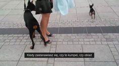 psy częstochowa
