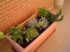 Le mie piante aromatiche. Da sinistra c'è la salvia, il timo limonato, la liquirizia, la salvia variegata, la salvia ananas e il rosmarino.  My aromatics plants.