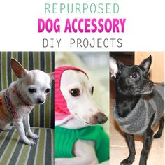 Repurposed Dog Accessory DIY Projects - The Cottage Market