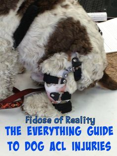 The Everything Guide to Dog ACL Injuries - Fidose of Reality