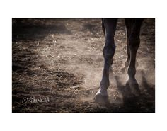 """Bronco"" KClarkWest Fine Art #photography #Western #NegativeSpace"