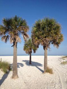 See 3208 photos and 295 tips from 25674 visitors to Clearwater Beach. Shell Beach, Ocean Beach, Beach Fun, Places In Florida, Florida Beaches, Beaches Near Orlando, Petersburg Florida, Clearwater Florida, Beautiful Dream