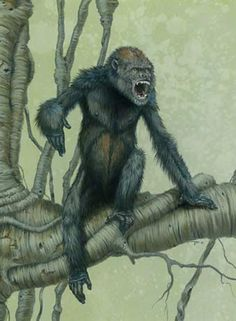 Pierolapithecus catalaunicus, shown here in an artist's conception, was an ancient ape that may have been the last common ancestor of all great apes and humans. Discovered in Catalonia, Spain, the fossil of Pierolapithecus catalaunicus is roughly 13 million years old.    Scientists believe that the newfound species's stiff lower spine and other special adaptations for climbing link this species to modern great apes.