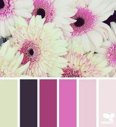 Gerbera hues