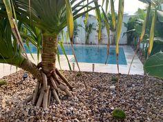 Building A Swimming Pool, Swimming Pools, Plants, Swiming Pool, Pools, Plant, Planets