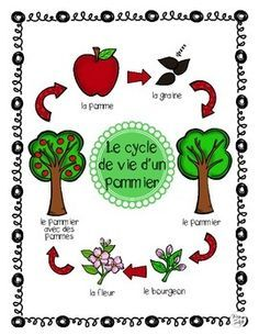 Apple Tree Life Cycle Posters and Science Pages ~ French ~ Le cycle de vie d'un pommier. Includes 6 Apple life cycle stages, Header (title page) and 6 arrows to create a bulletin board display. Tree Life Cycle, Apple Life Cycle, Life Cycle Stages, Montessori, Abstract Tree Painting, Christmas Tree Art, Apple Unit, Apple Activities, Guest Book Tree