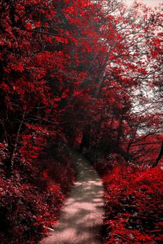 gin-no-ouji: Into the Bloodred Forest by Aenea-Jones – Red Wallpaper Red Wallpaper, Flower Wallpaper, Nature Wallpaper, Aesthetic Iphone Wallpaper, Aesthetic Wallpapers, Beautiful Forest, Beautiful Places, Beautiful Pictures, Elisabeth I