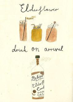 Elderflower drink -Katt Frank Illustration