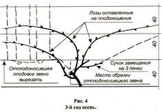 http://www.nrose.ru/images/vino11.jpg