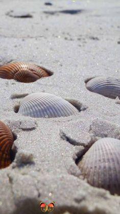 shells Sea Shells Sand<br> Beach Aesthetic, Summer Aesthetic, Shells And Sand, Sea Shells, I Love The Beach, Am Meer, Beach Photography, Simple Pleasures, Beach Pictures