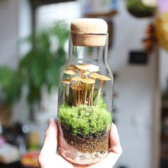 For the tiny places you discover (or make) that look like they could be a world of their own. Potted Plants, Garden Plants, Indoor Plants, Mini Terrarium, Water Terrarium, Terrarium Containers, Paludarium, Vivarium, Plant Aesthetic