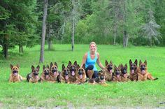 What a fabulous grouping of #German #Shepherd #Dogs. IS SHE IN DOG HEAVEN !!!!:):):)