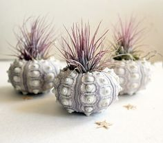 air plant urchin terrarium by robincharlotteStudio on Etsy, $10.00  I might be able to garden after all!
