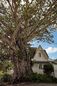 Strangler Fig Tree // Step back in time by visiting Russell on New Zealand's North Island. It's charm and made for the perfect day trip in the Bay of Islands.
