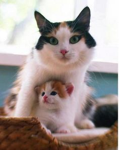 If this mama cat was my cat, I would name her  Cleopatra because of her beautiful natural eyeliner. :-)