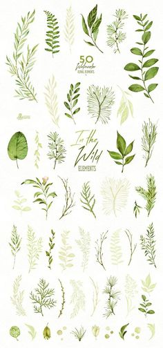 Herbs Clipart Elegant In The Wild 50 Individual Watercolor Floral Elements Leaves - Clip Art Watercolor Leaves, Floral Watercolor, Watercolor Paintings, Tattoo Watercolor, Watercolor Quote, Watercolor Design, Watercolor Ideas, Abstract Paintings, Simple Watercolor Flowers