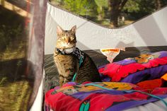 Our detailed guide has everything you need to know about camping with your feline friend.