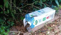 Denna hemgjorda snigelfällan kostar under 1 krona och utrotar mördarsniglar på rekordtid! - ViralKing.se