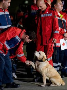Mexican rescue team and their search and rescue dog, Haiti big  earthquake.