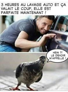 Ils font un humour - Le Pigeon, English Caption, English Jokes, Lol, Funny Messages, Me Too Meme, Derp, Funny Facts, Laugh Out Loud