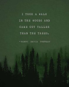 Quotes Discover Henry David Thoreau quote poster I took a walk in the woods mens art trees poster gifts for him Into The Woods Quotes, Walk In The Woods, Out Of The Woods, Henry David Thoreau, Thoreau Quotes, Tree Quotes, Quote Posters, Quote Art, Beautiful Words