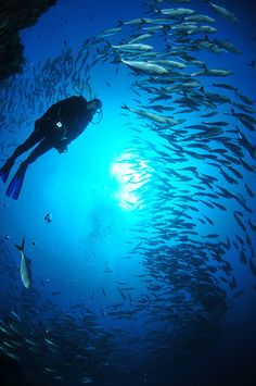 go diving at twin rocks, Anilao, Batangas  Philippines