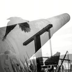 Free as a bird!! Henrique Da Ponte Photography