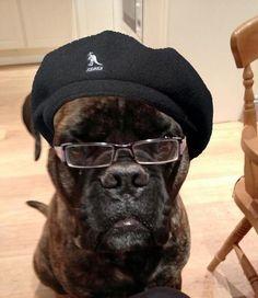 This dog totally looks like Samuel L Jackson...