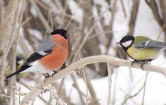 ❄Самый тёмный месяц года, Засыпает вся природа: Тусклый день и ночь длинна. Ох, не видно ей конца! Неба хмурого пора, Ранних сумерек... Зима Крепко на ноги уж встала И морозами трещала. Birds, Animals, Period, Animales, Animaux, Bird, Animal, Animais