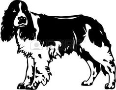 Springer Spaniel clipart #16, Download drawings